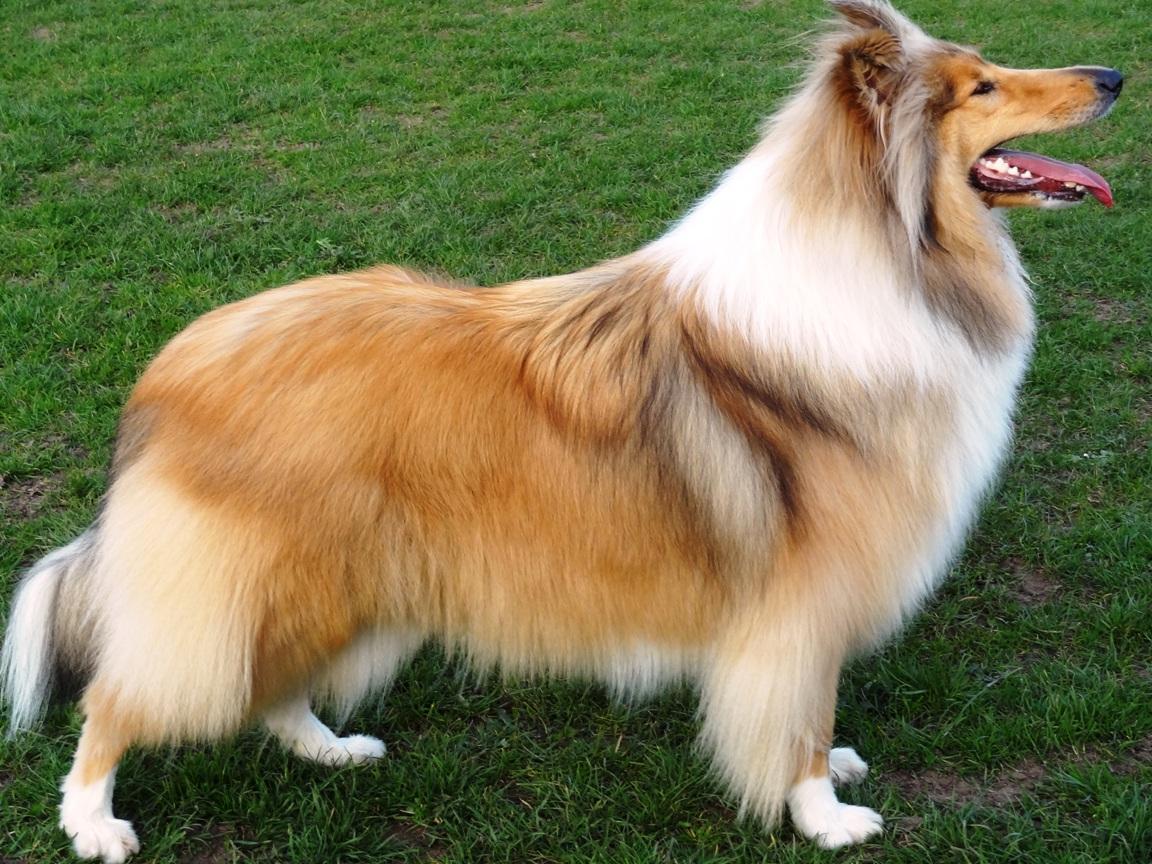 Luna (Our Dog)