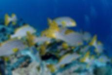 fish-2311560_1920.jpg