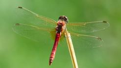dragonfly-177338_1920_edited.jpg