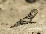reptile-3334337_1920.jpg