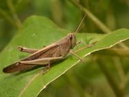 grasshopper-1528967_1920.jpg