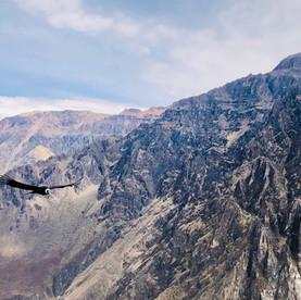 Peru: Colca Canyon, condors en tips tegen hoogteziekte