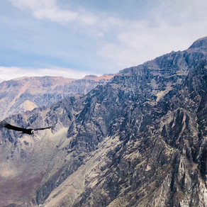 Peru: Colca Canyon, condors en knallende koppijn