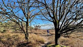 Gele Zwerfkeienroute: prachtig wandelen in Loenermark
