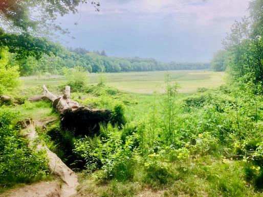 Het Hartensepad: een heerlijke wandelroute in Renkum