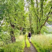 Klompenpad Dashorsterpad: vijftig tinten groen op een 'gezegend' pad