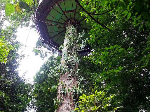 Costa Rica: overnachten in een duurzaam Treehouse