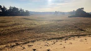 Wandelen Wekeromse Zand: weidse uitzichten en puur natuur