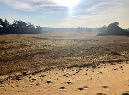 Wekeromse Zand: puur natuur