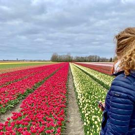 Tulpenroute Flevoland: mis 'm niet, nog één week wandelen, fietsen of toeren