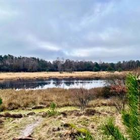 Boswachterspad Kootwijk: een rustige route rondom het Kootwijkerzand