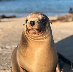 Boobies op de Galapagos
