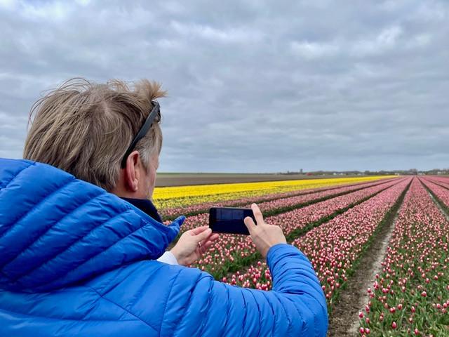 flevoland-tulpenroute