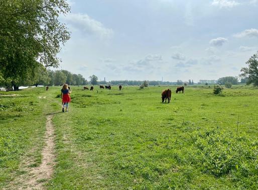 Doddendaelpad: Rode Geuzen en Konik paarden