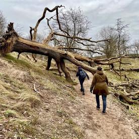 Wandelroute Kennemerland: op en neer over het Bleek en Berg pad
