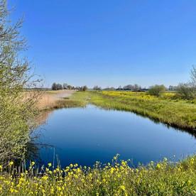 Klompenpad Zoddenpad: een natte oase in een oer-Hollands Landschap