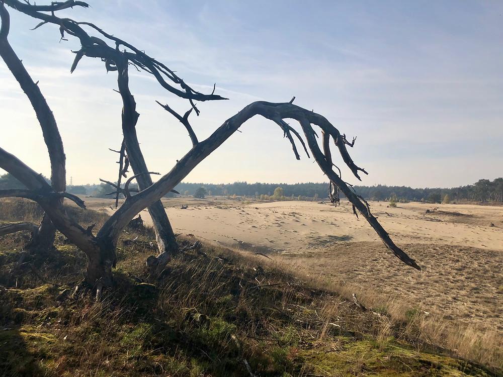 wandelen-wekeromse-zand