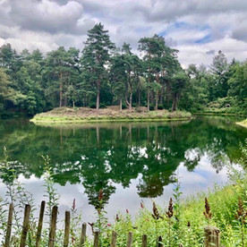 Bornia en Heidestein: verscholen wandelparadijs in Midden Nederland