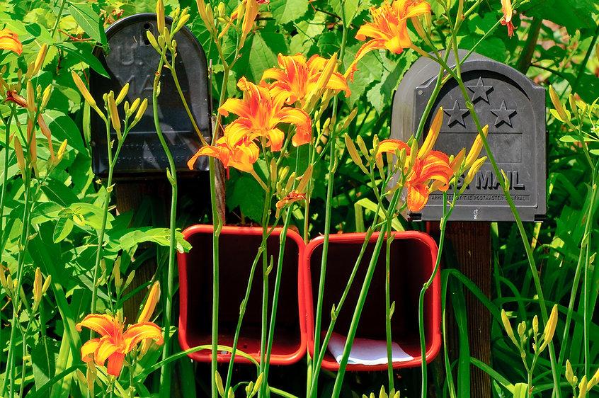 Annapolis Photographer Mailbox