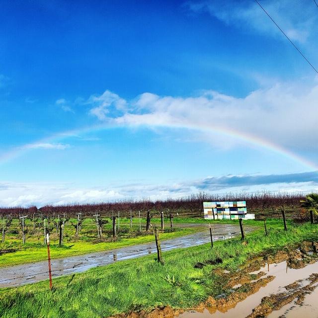 Carizzo Plains Buckwheat & Super Bloom
