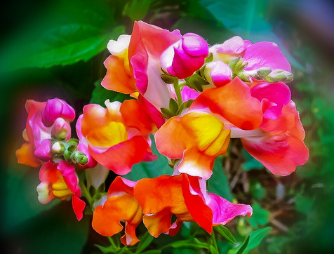 My Flowers .jpg