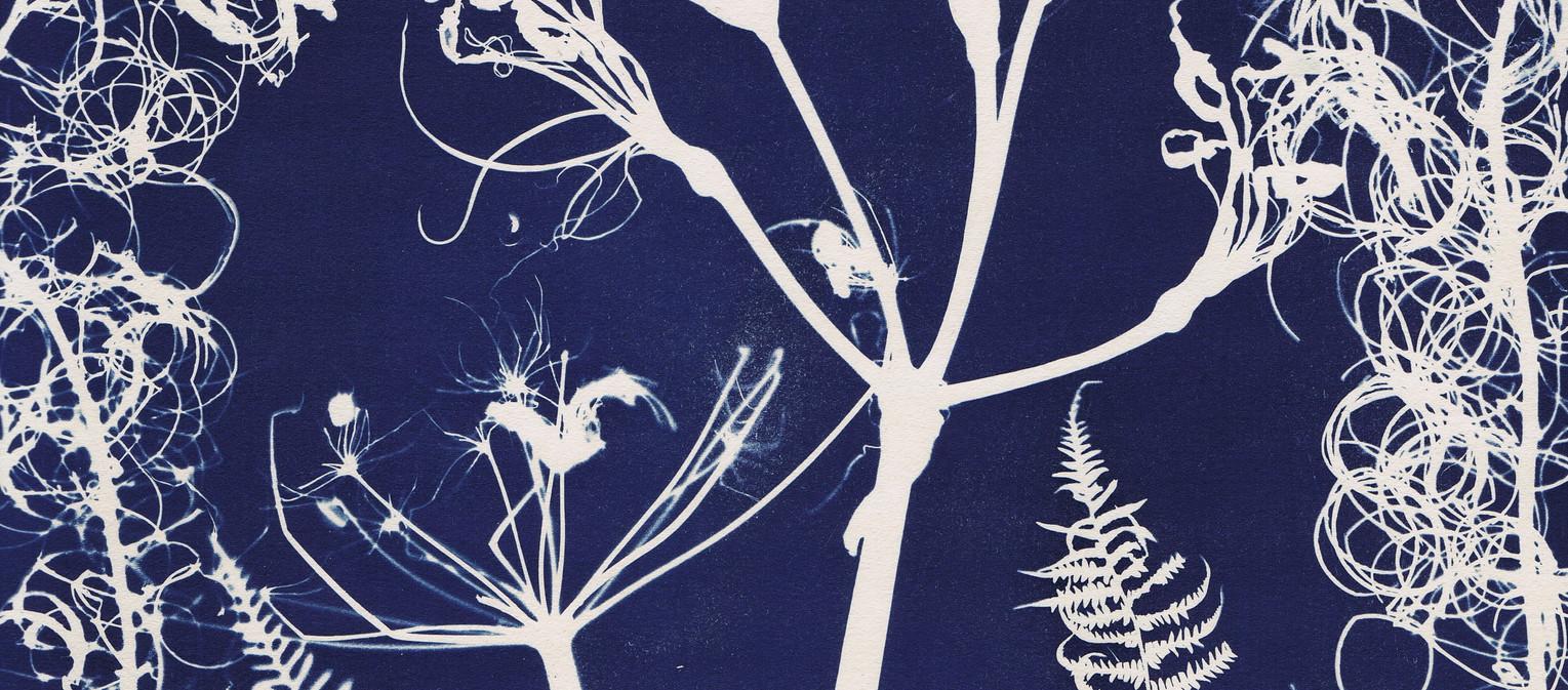 Seed Time II, 315 x 450 mm by Helen Roberts .jpeg