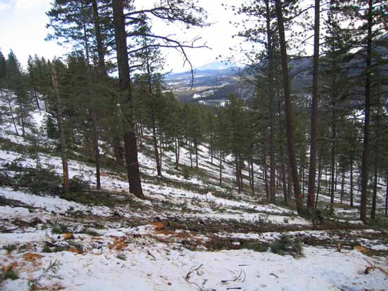 This is the hillside after logging. By carrying out the work in the winter on snow and frozen ground there is very little soil disturbance in the cutblock.
