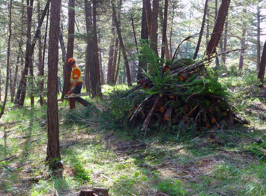 A worker finishes building a burn pile along Duck Pond Trail.