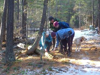 Tracking winter greenery