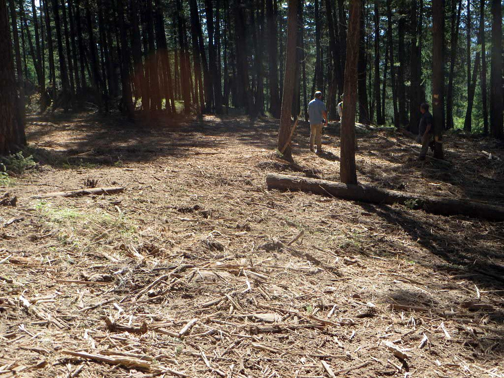The forest floor after some heavy mulching.
