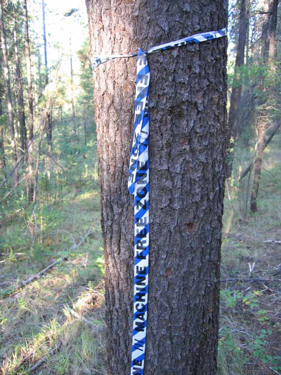 In areas of the Park where logging will occur, the footpaths have been marked with these ribbons to prevent their use as skid trails.