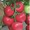 Thumbnail: Sakata ПИНК ИМПРЭШН ( TM 10739 ) Гибрид  F1,  Томат (500сем)