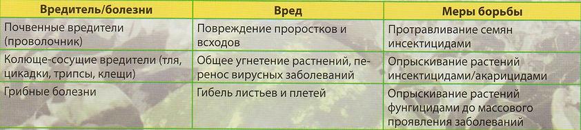 Рекомендации по выращиванию  Арбуза