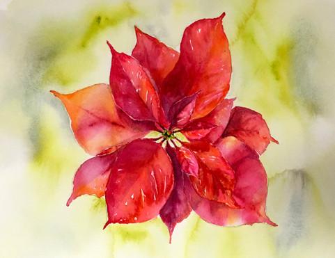Poinsettia print.card.jpg