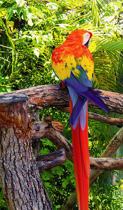 Parrot_small
