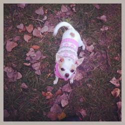 LolaSweater