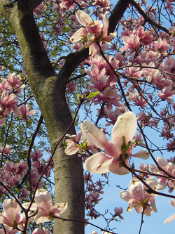 flowertree2