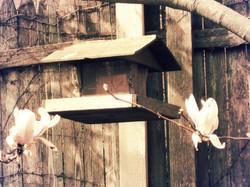 Birdhouse2peachydreamy