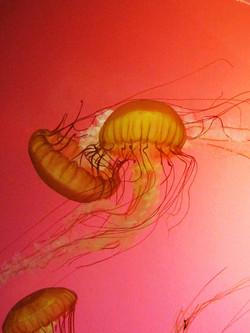 jellyfishembrace