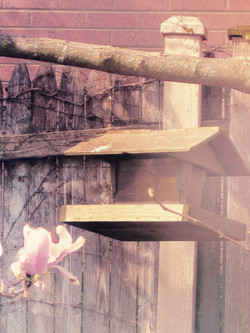 Birdhousepinkaction