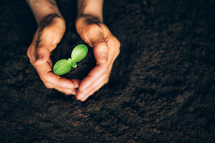 hands-holding-green-seedling-sprout-over
