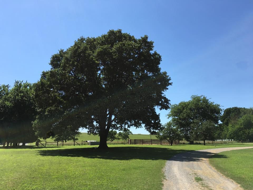 413 farm wedding