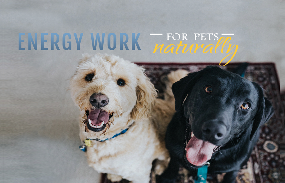 Energy Work for Pets