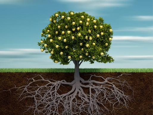 Het Hebreeuwse wortel-systeem