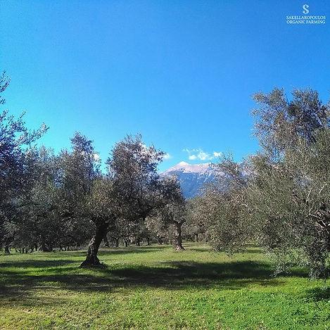 organic farm Sakellaropoulos.jpg