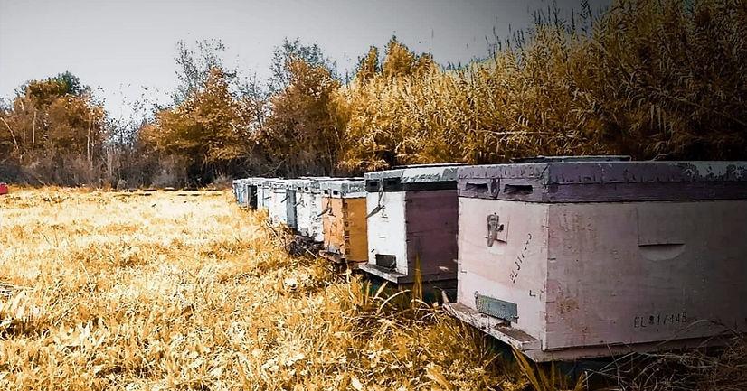 beehives_edited.jpg