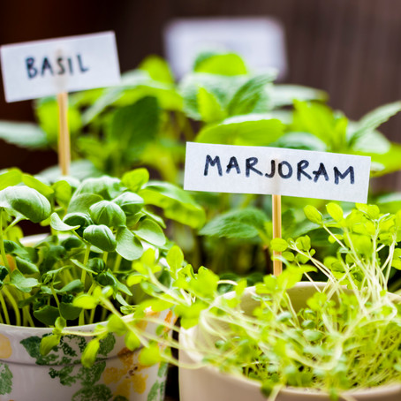 Uplift Your Mood by Growing a Kitchen Herb Garden