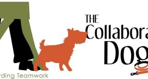 CollDog-logo_edited_edited_edited_edited