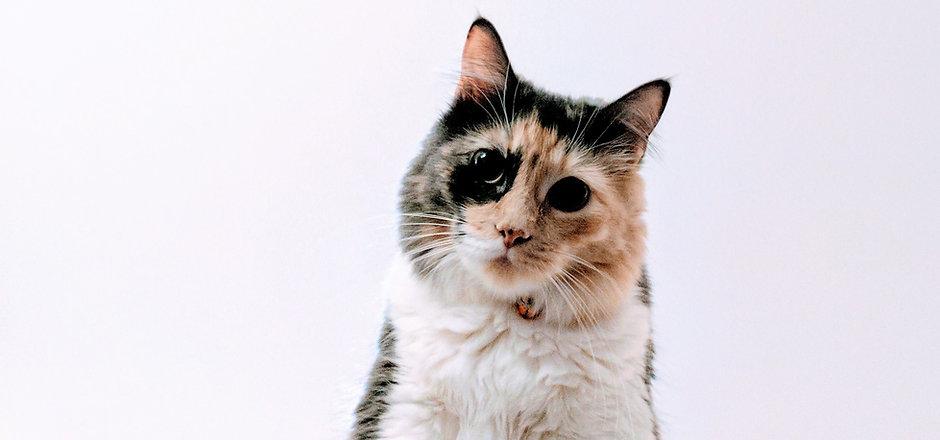 Разноцветная кошка