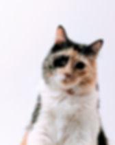 Multi-Colored Cat